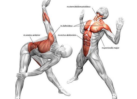 Anatomie TigerMove